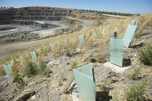 Looking over the top of revegetation planting in a quarry.  shot from plant level. - Mining Photo Stock Library