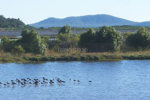 Environment sustainability photo of birds sitting on a dam in a mine site. - Mining Photo Stock Library