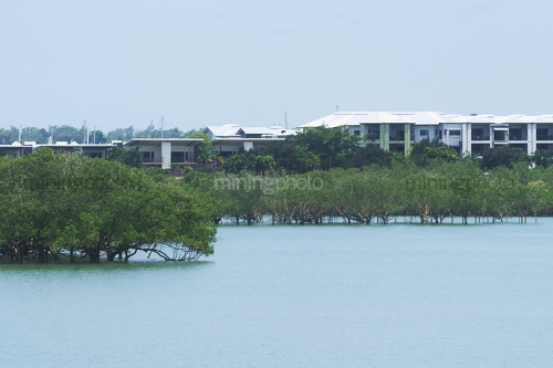 Residential development built amongst mangroves. photo taken from the water at high tide with mangroves in foreground - Mining Photo Stock Library