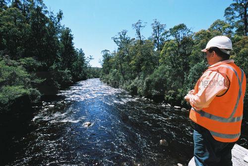 Forestry worker looking downstream while standing on log bridge. clean fresh water flowing downstream.  shot from behind. - Mining Photo Stock Library