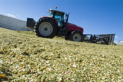Tractor aerating silage corn for storage. - Mining Photo Stock Library