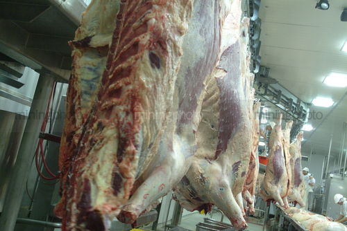Sides of beef hanging in abattoir - Mining Photo Stock Library