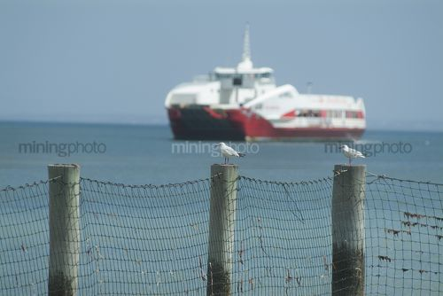 Car and passenger ferry on open ocean with seagulls on post fence in focus in foreground. - Mining Photo Stock Library