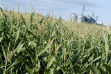 Mining Photo Stock Library - corn growing in field with storage silos in background ( Weight: 5  New Image: NO)