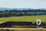 Mining Photo Stock Library - windmill with cattle in feedlot in background ( Weight: 3  New Image: NO)