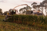 Mining Photo Stock Library - truck and harvester working together harvesting corn in paddock ( Weight: 3  New Image: NO)