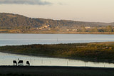 Mining Photo Stock Library - beef cattle by large lake with feedlot in background ( Weight: 2  New Image: NO)