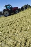 Mining Photo Stock Library - tractor aerating silage corn for storage. ( Weight: 1  New Image: NO)