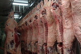 Mining Photo Stock Library - sides of beef hanging in abattoir  ( Weight: 1  New Image: NO)