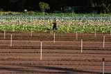 Mining Photo Stock Library - worker attending to commercial crops in field ( Weight: 2  New Image: NO)