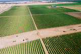 Mining Photo Stock Library - Healthy green fruit trees in segregated rows growing in outback Queensland.  aerial shot ( Weight: 3  New Image: NO)