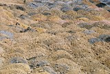 Mining Photo Stock Library - Great photo showing pattern of overburden in stockpiles ( Weight: 1  New Image: NO)