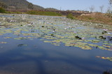Mining Photo Stock Library - water plants on surface of a dam. mine site in background. ( Weight: 1  New Image: NO)