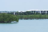 Mining Photo Stock Library - residential development built amongst mangroves. photo taken from the water at high tide with mangroves in foreground ( Weight: 1  New Image: NO)